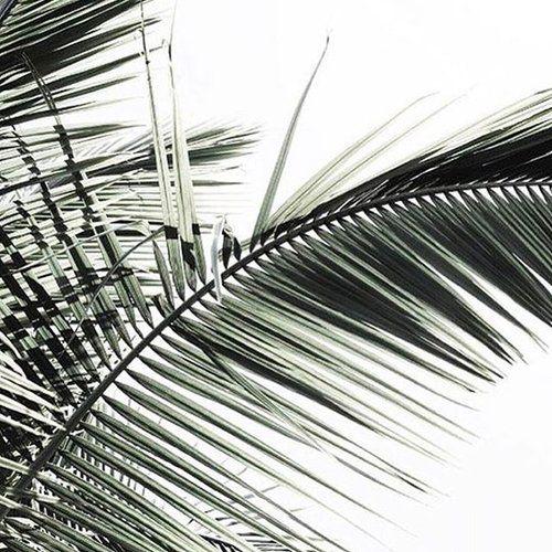 Some tropical inspiration for an exciting new branding & website client 🌴 📸 @mintlanestudio . . . . . . . #christchurchcreatives #christchurchcreative #travelblogger #tropical #tropicalparadise #inspiration #inspired #branding #websitedesign #websitedesigner #design #designer #designingwomen #creativeentrepreneur #graphicdesign #graphicdesigner #moodboard #mood #photography #girlboss #girlbosses #girlbosslife