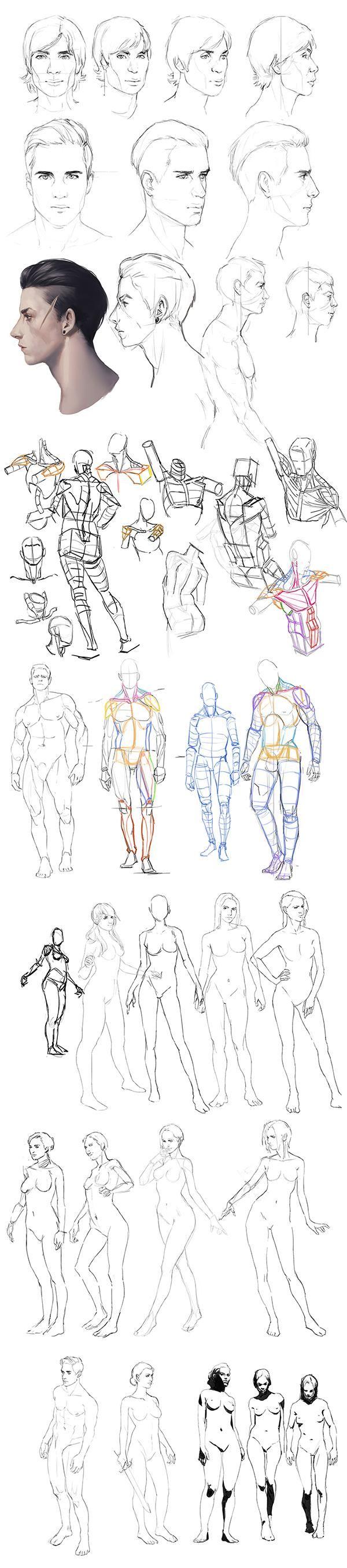 Anatomy practice by mannequin-atelier on DeviantArt