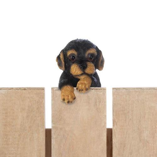 """Climbing Cutie Dotson Puppy """"""""Parker"""""""""""