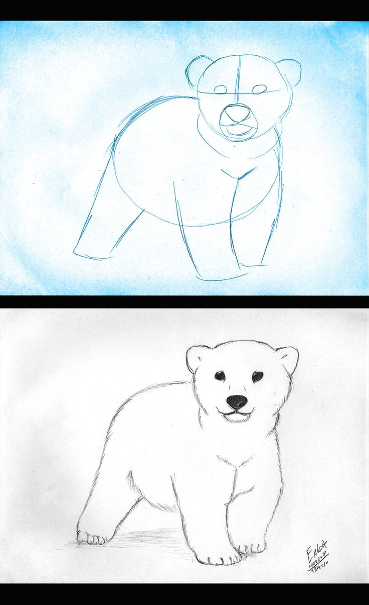How to draw Polar Bear Cub by Hauru7 on deviantART