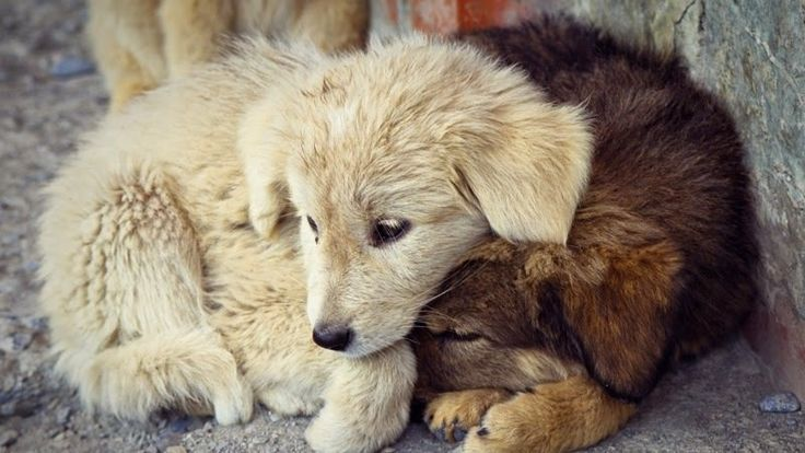 Sponsorizza Theresa May, Prime Minister of the United Kingdom: Create an animal welfare law modeled after Luxembourg's newly proposed animal welfare law!