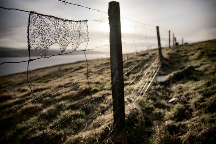 Image result for old barb wire fence with wool stuck on it