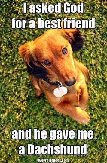 So true. I was blessed with a new best friend who knows just how to tickle my heart. Love my baby girl so much. Couldnt have asked for a better dog.