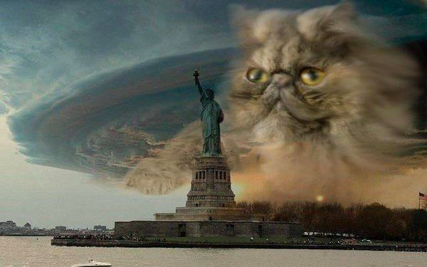 Fake Hurricane Sandy Photo 01Twitter, The Real, Sandy Photos, Nature Disasters, Sandy Cat, Hurricane Sandy, Storms, So Funny, Kitty