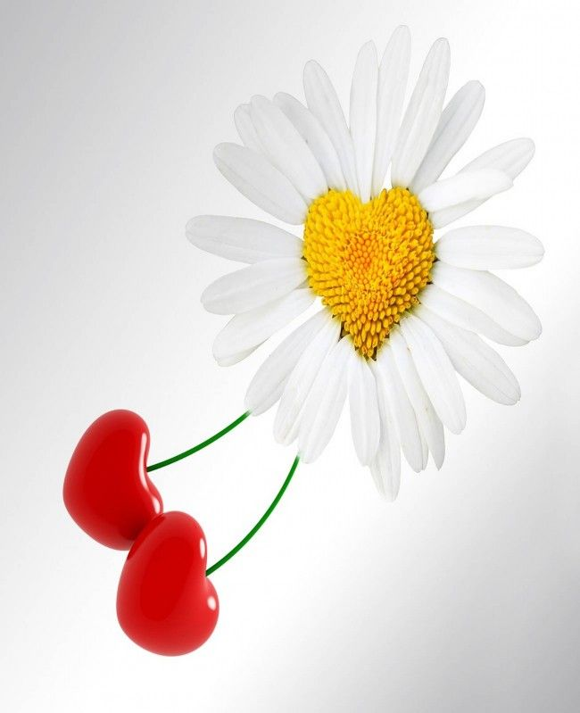 Beautiful Flower For Wallpaper: 75 Best FLOWERS WALLP[APERS Images On Pinterest