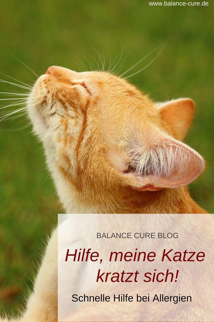 Was Hilft Deiner Katze Wirklich Gegen Ihre Allergie Eine Ausschlussdiat Katzen Tiere