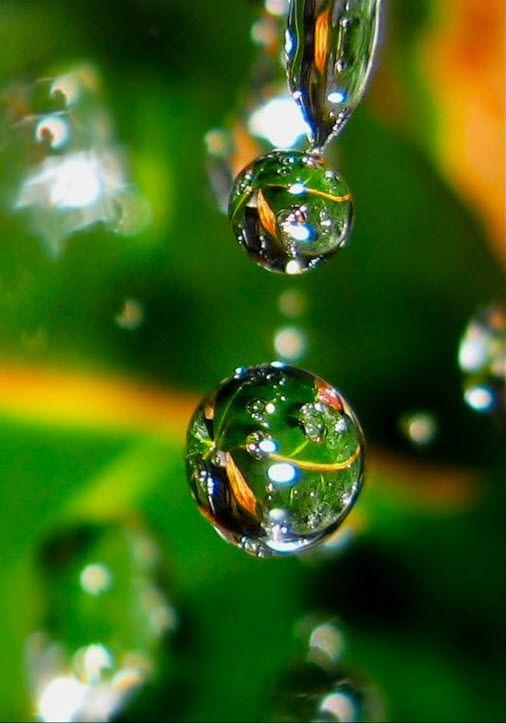 Makrofotografie Zweig Drop – Google-Suche