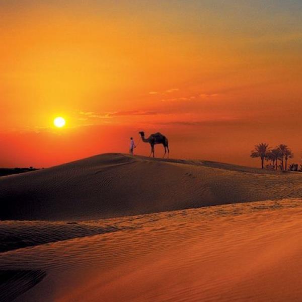 The Arabian Desert