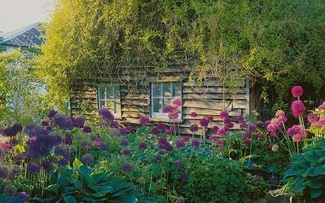 Vine-covered shed in Roald Dalh's garden at Gipsy House, Great Missenden - with lots of hostas and giant alliums