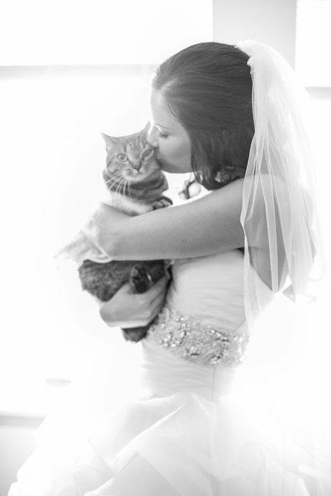 Cat and wedding
