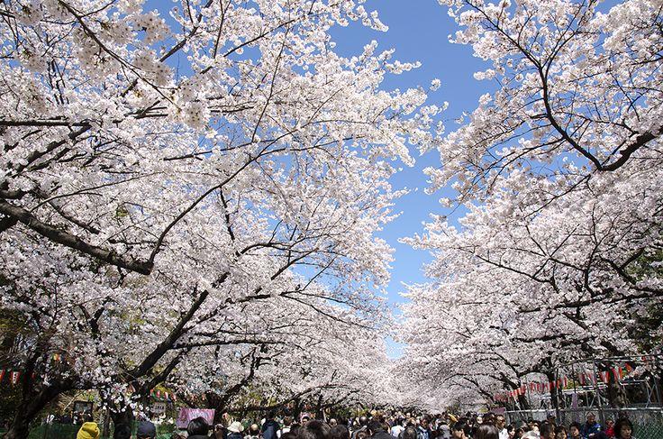 上野公園1.jpg  http://www.jnize.com/en/article/100000034/