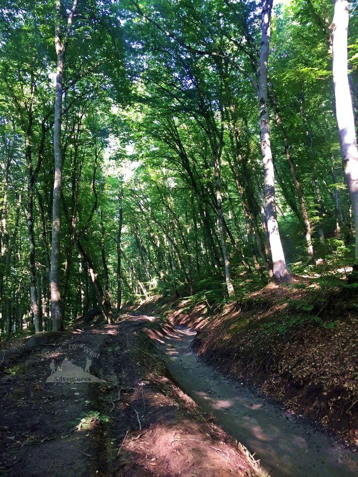 Stream through a forest in Quba #easttowestadventures #azerbaijani #azerbaijan #quba #kuba #forest #foreststream #greenleaves #forestbathing #roadtrip #unexpected #lovelysurprise #hiking #slippery #nature #naturelovers #naturephotography #forestphotography #peaceful #longtrip #goodfriends #greatmemories