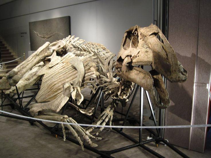 « Mummy » of dinosaur Prosaurilophus maximus, Cretaceous ...