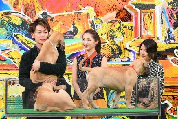 【写真を見る】世界一背が高いとされるグレートデーンの子犬と佐藤