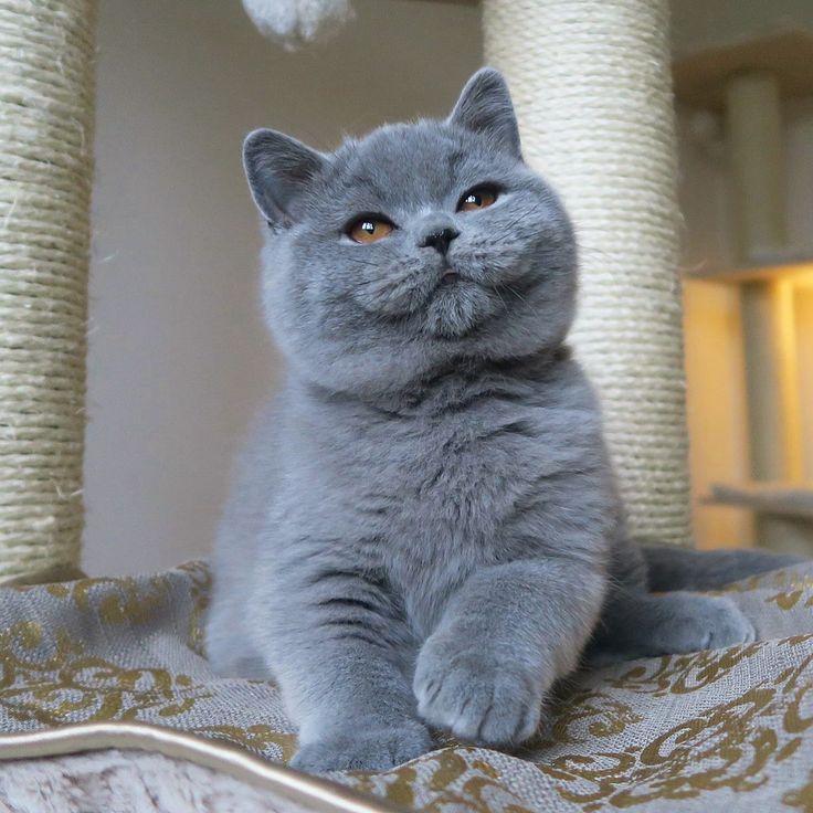 Адские кошечки hell s kittens онлайн