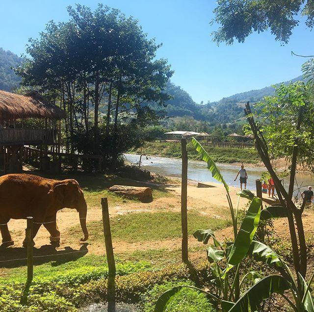 Der Elephant Nature Park ist einer der schönsten Orte, an denen ich je gewesen bin! Prüfen…   – Asia Travel