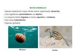 Resultado de imagen para animales pluricelulares ejemplos