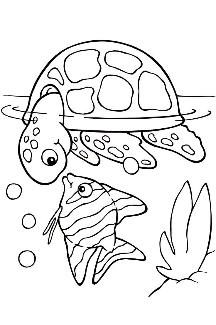Viewing Gallery For Cute Turtle Drawing 3275 Sea Coloring Page
