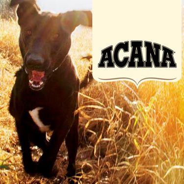 Descubre los alimenty os para perros Acana. De origen canadiense, los alimentos para perros Acana y Orijen son Biológicamente Apropiados™, cualidad por la que han sido galardonados. Elaborados sólo con ingredientes frescos locales y cocinados en las propias cocinas de la marca de forma natural.