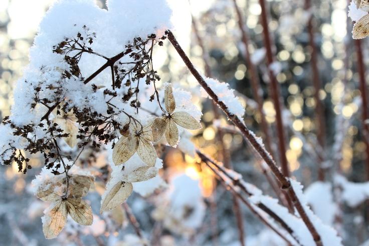 Winter flower, macro photography