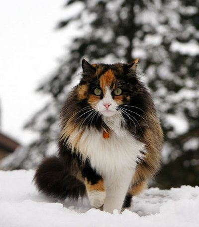 Name: Angel Gender: She-cat Clan: none Rank: Kittypet Personality: She is spunky and bold. Is always trespassing into the riverclan borders and is in trouble often