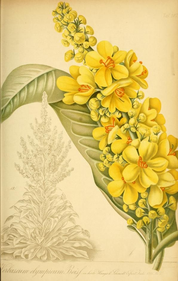 Fresh Gartenflora zeitschrift f r garten und blumen