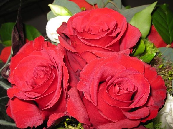 http://flowerdeals.spruz.com/  Learn More Here - Flowers Coupon  Flower Delivery Express Coupon,Flower Coupons