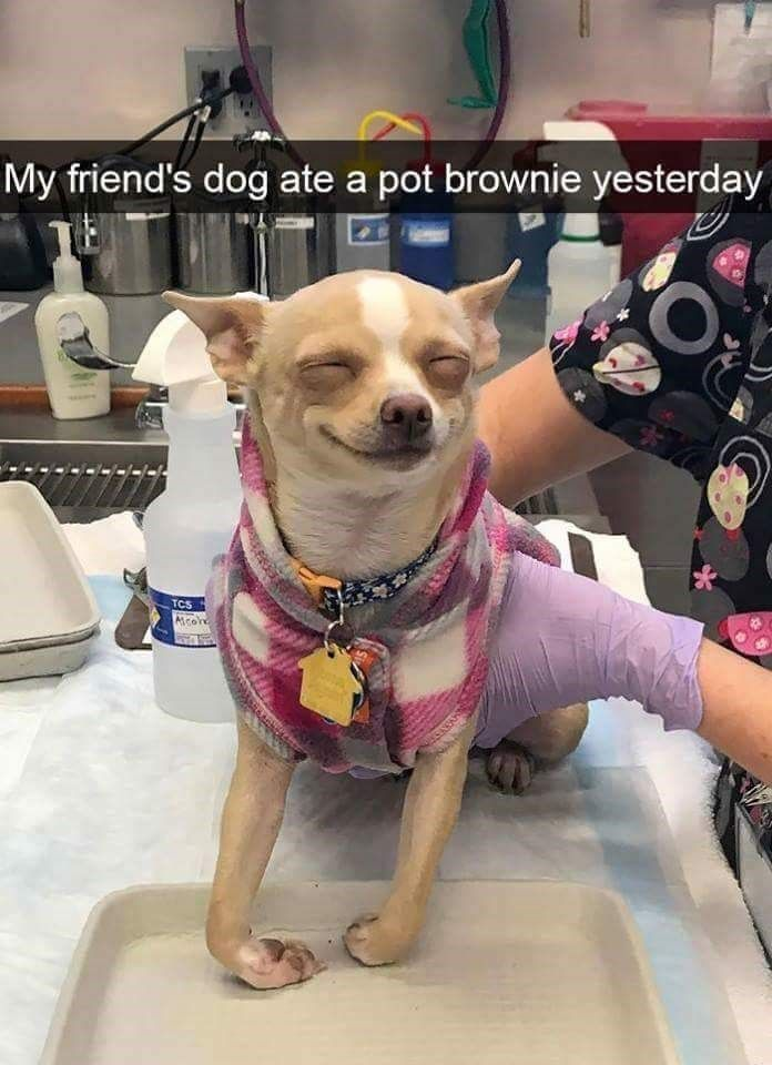 13 Hilarious Doggo Snaps That Ll Get Your Tail Wagging Dog