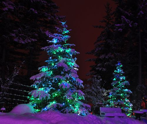 Purple & Aqua lite Trees for the Holidays