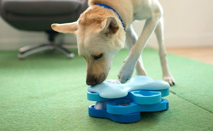 Brain Teasing Toys For Dogs Who Are Too Smart For Their Own Good