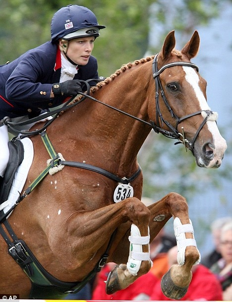 Toytown- truly a special event horse. Irish Sports Horse