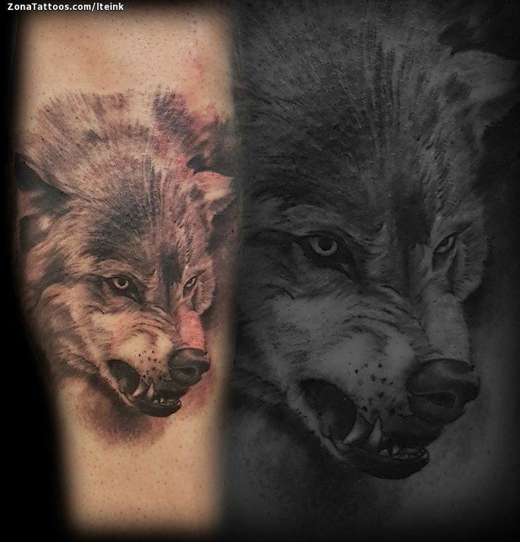 Tatuaje hecho por Juan de Tarragona (España). Si quieres ponerte en contacto con él para un tatuaje/diseño o ver más trabajos suyos visita su perfil: https://www.zonatattoos.com/lteink  Si quieres ver más tatuajes de lobos visita este otro enlace: https://www.zonatattoos.com/tag/118/tatuajes-de-lobos  Más sobre la foto: https://www.zonatattoos.com/tatuaje.php?tatuaje=111587