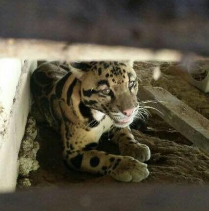 (6 Foto) Cucu Kata Nampak 'Kucing' Besar