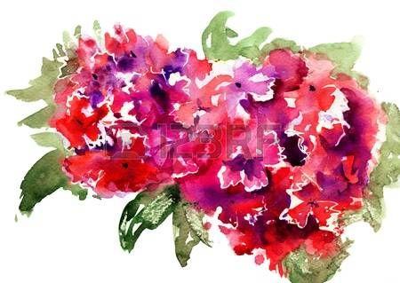 Bellissimi fiori di ortensia rosso, illustrazione acquerello photo