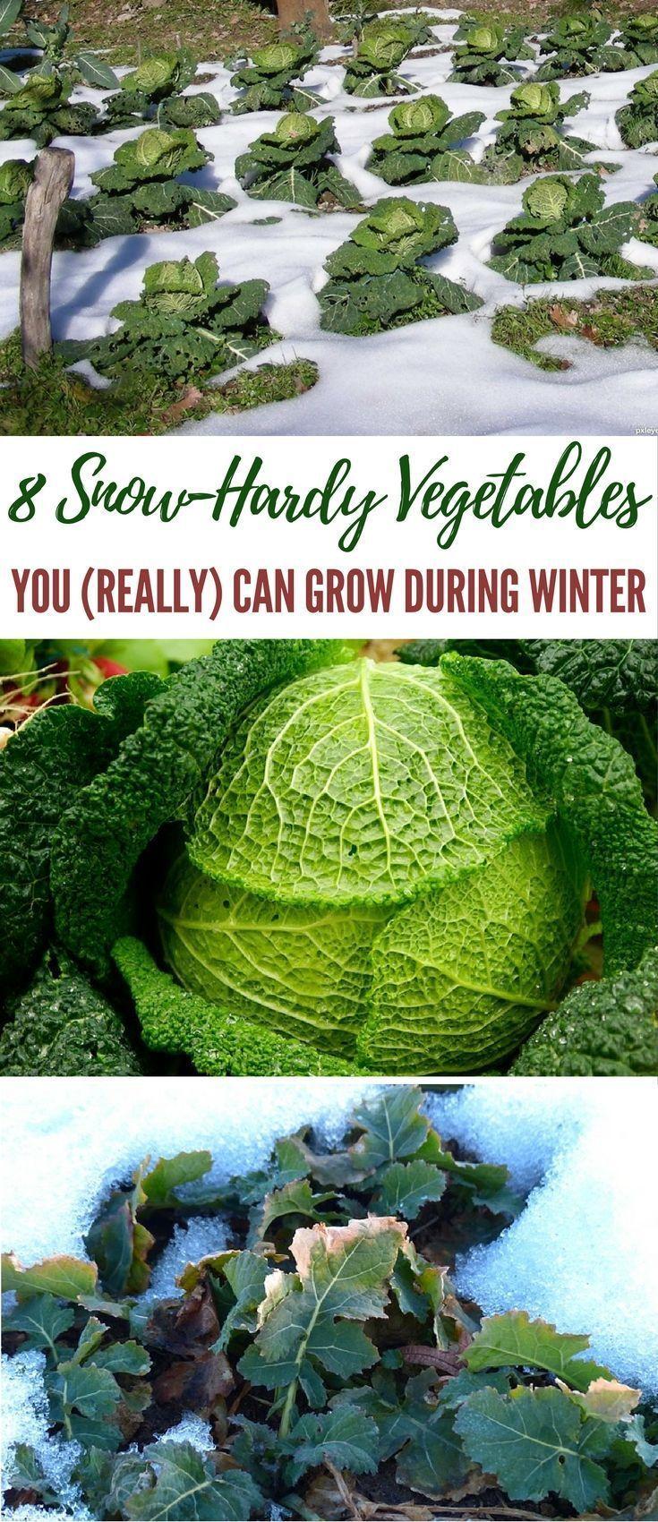 77 best gardening winter images on pinterest organic gardening