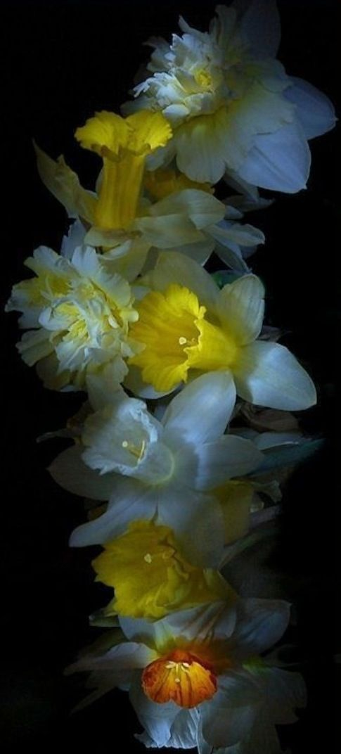 types rare flowers