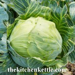 Cabbage In Season – The Kitchen Kettle
