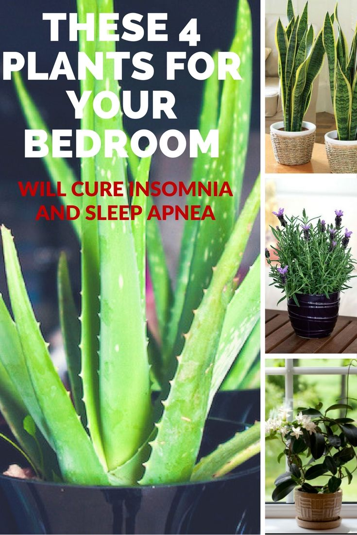 These 4 Plants For Your Bedroom Will Cure Insomnia And Sleep Apnea…