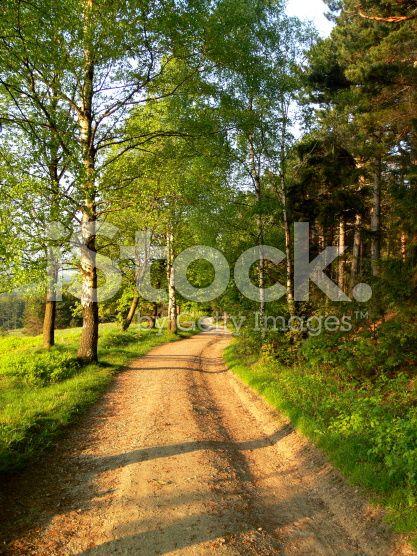 Blossoming natural landscape – lizenzfreie Stock-Fotografie