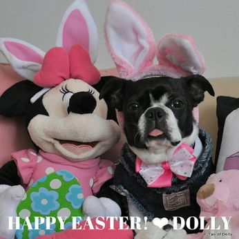 DOLLY ZEN Easter is the only time of the year when it's perfectly safe to put all your eggs in the same basket  ~ Kurt Avish ❤ Dolly