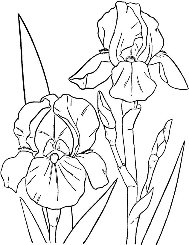 Spring Flowers Images Coloring Pages