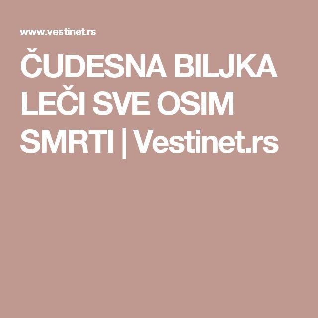 ČUDESNA BILJKA LEČI SVE OSIM SMRTI   Vestinet.rs