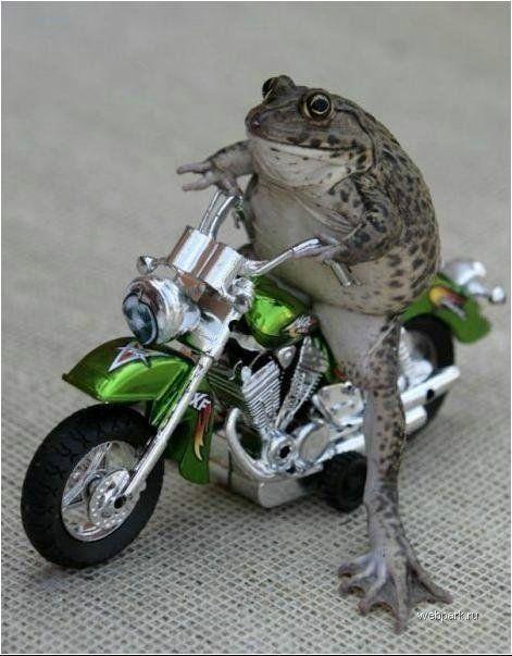 Froggy Biker