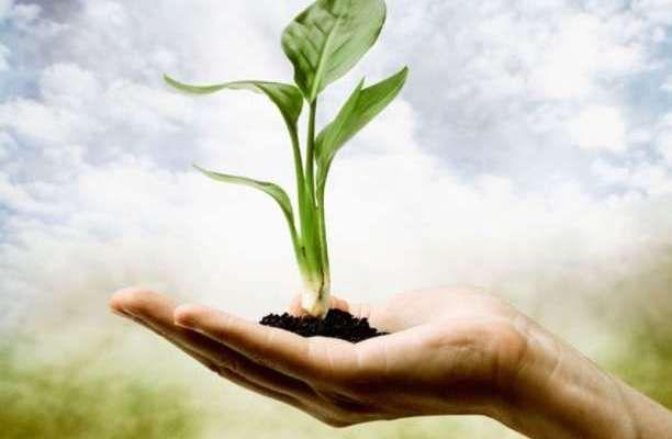 υγεία φυτό δημιουργία πράσινο