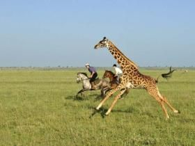 Kenya horse trekking holiday... Although feel bad for the spooked j!