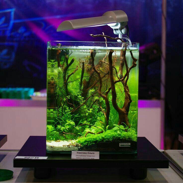 690 best life in transparent tank images on pinterest - Petit aquarium design ...