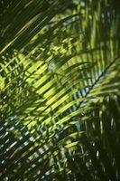 how to remove/kill palm tree stump