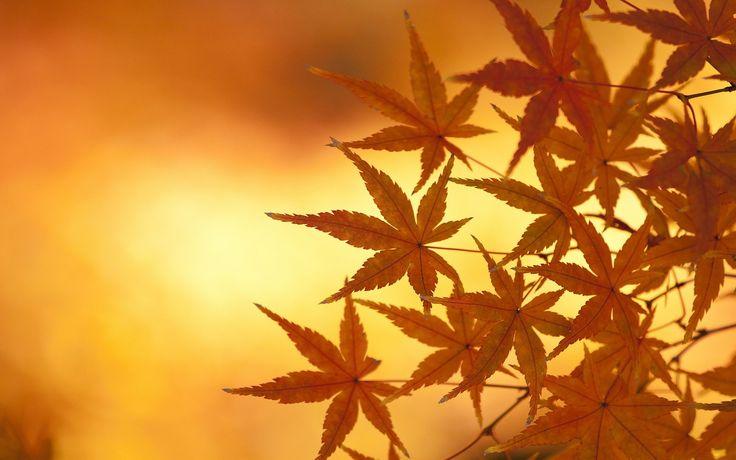 autumn desktop wallpaper hd wallpapers
