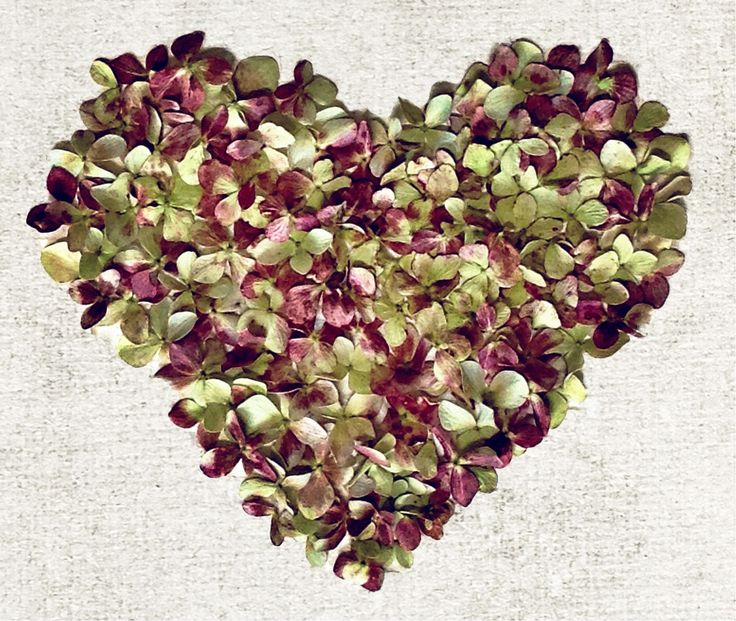 Another hydrangeas heart.