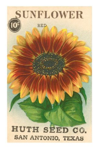 Sunflower Seed Packet Premium Poster
